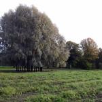 Rosendal Garten